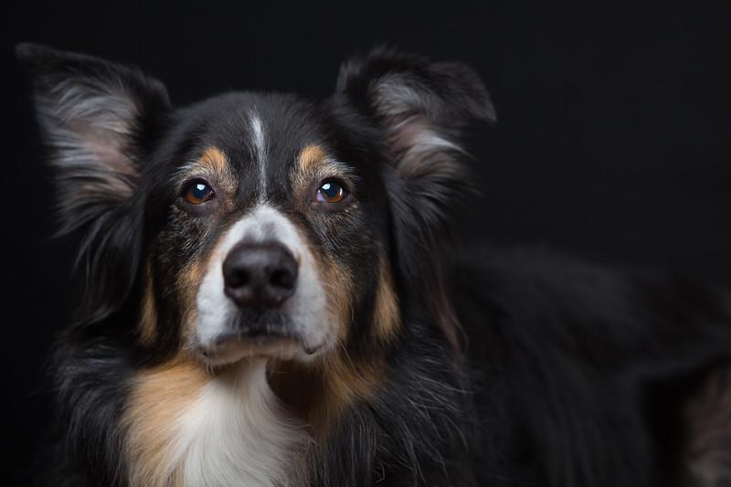 Soul of a dog.