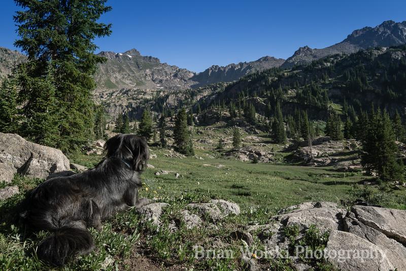 Dog Overlooking Colorado Mountains