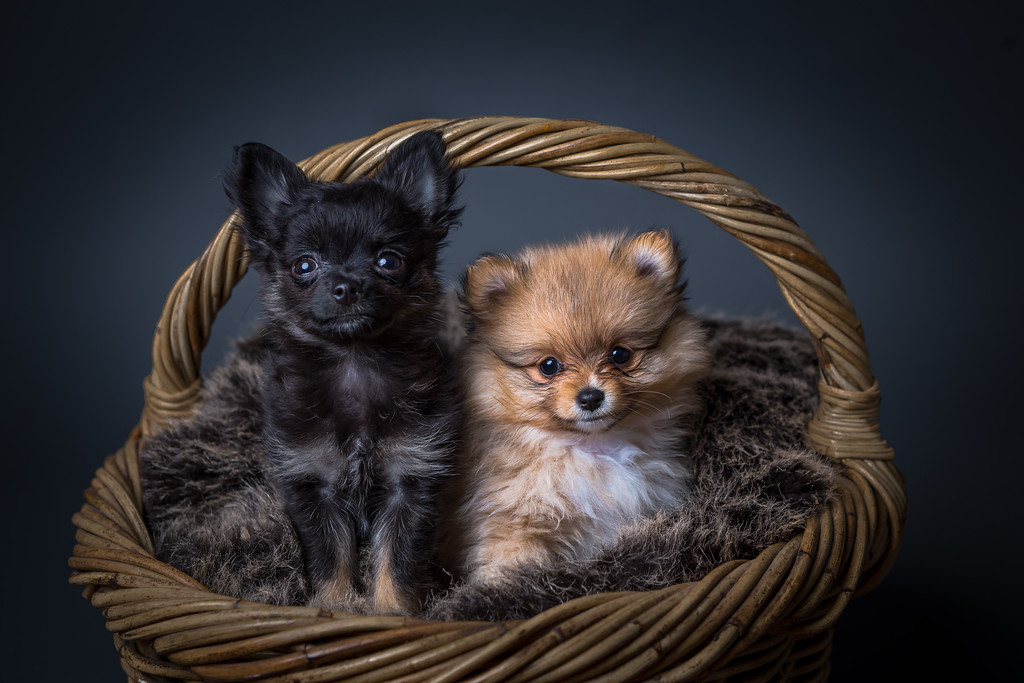 Bear & Bella