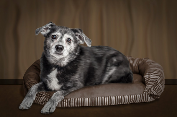 Pet-Portraits-CC_LB_Photography-10
