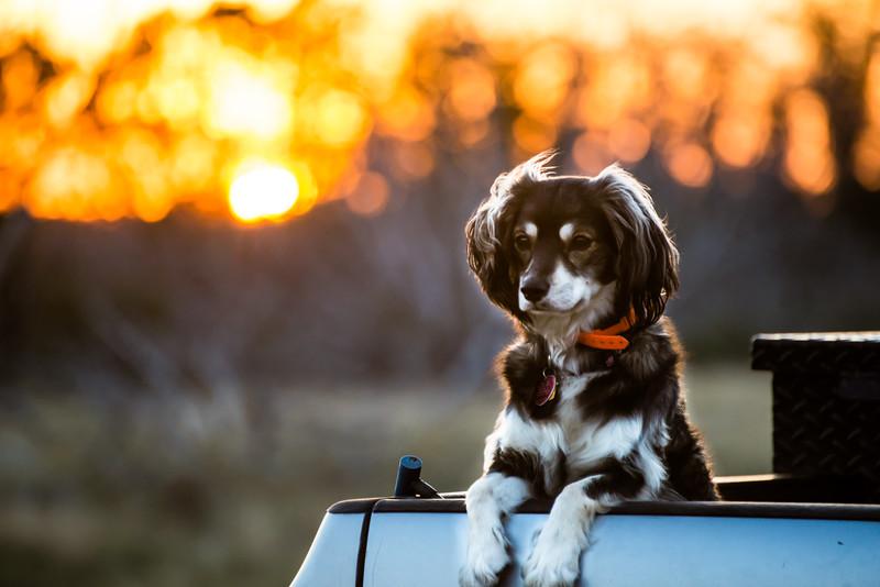 Kili in the Sunset