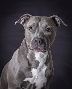 Pet-Portraits-CC_LB_Photography-11