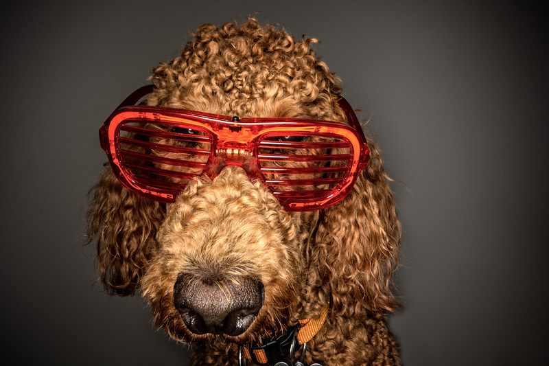 In this shot, I wanted a fun, whimsical look, and so I used an 11-16mm lens at 11mm to purposefully distort my dog's features.  I lit the scene with an Orbis ringflash mounted on my Nikon SB-910 to give the image a club photography vibe.  The trickiest part was balancing the sunglasses on my dog's nose.