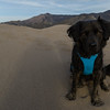 Dog in Great Sand Dunes National Park