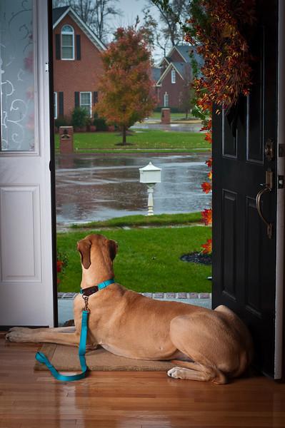 Rainy Day Wally