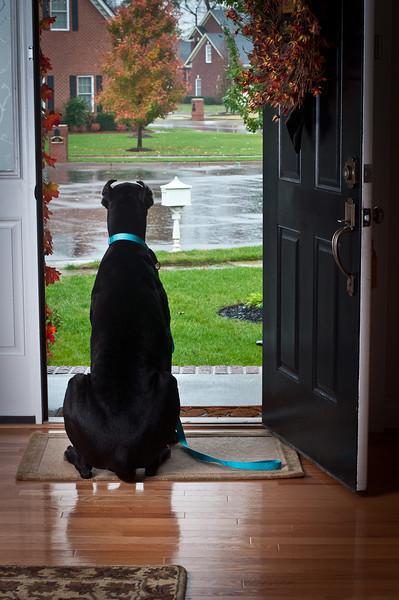 Rainy Day Thor
