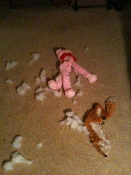 Dog toy crime scene