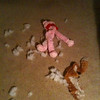 Dog toy crime scene
