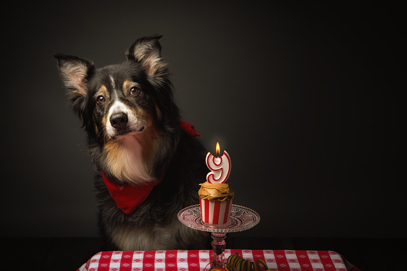 Jack turns 9!