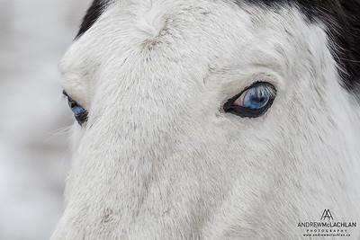 Horse, Ontario, CAnada