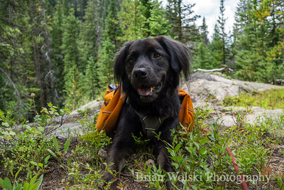 Black Dog in Colorado Wilderness