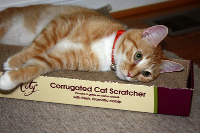 I love my new scratcher!