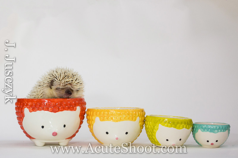 A cup of Hedgehog