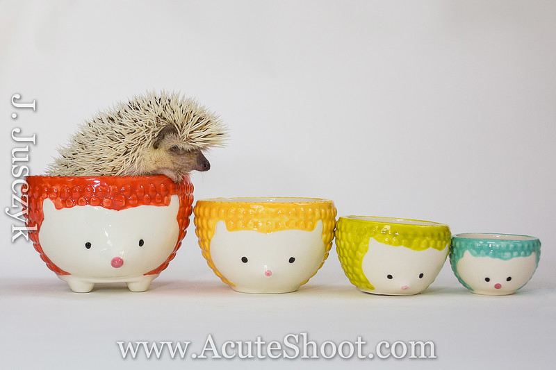 Cup full of hedgehog!
