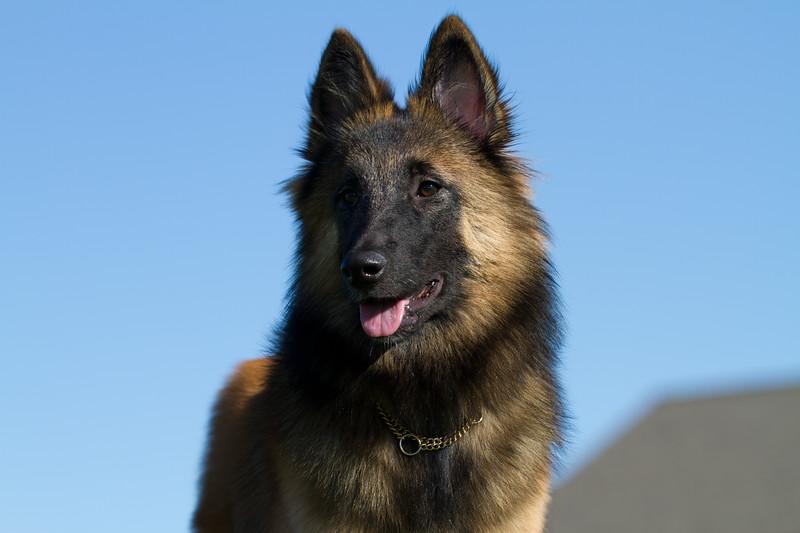 111025-dog-sedona-0557
