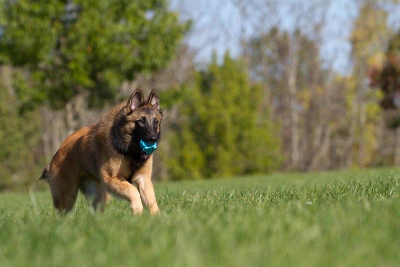 111025-dog-sedona-0562