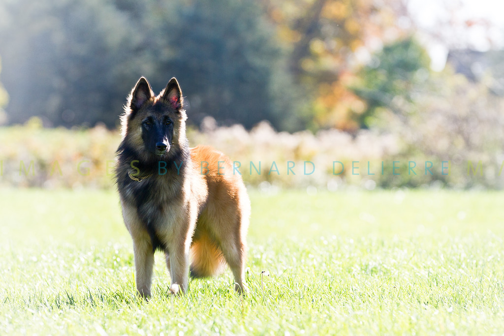 111025-dog-sedona-0852