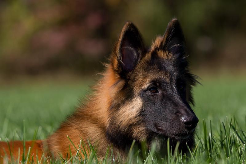 111025-dog-sedona-0761
