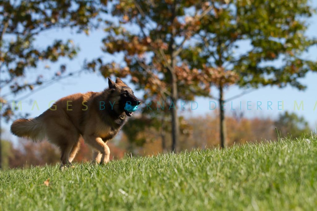 111025-dog-sedona-0614