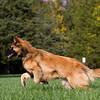 111025-dog-sedona-0742