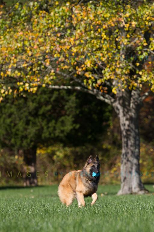 111025-dog-sedona-0665