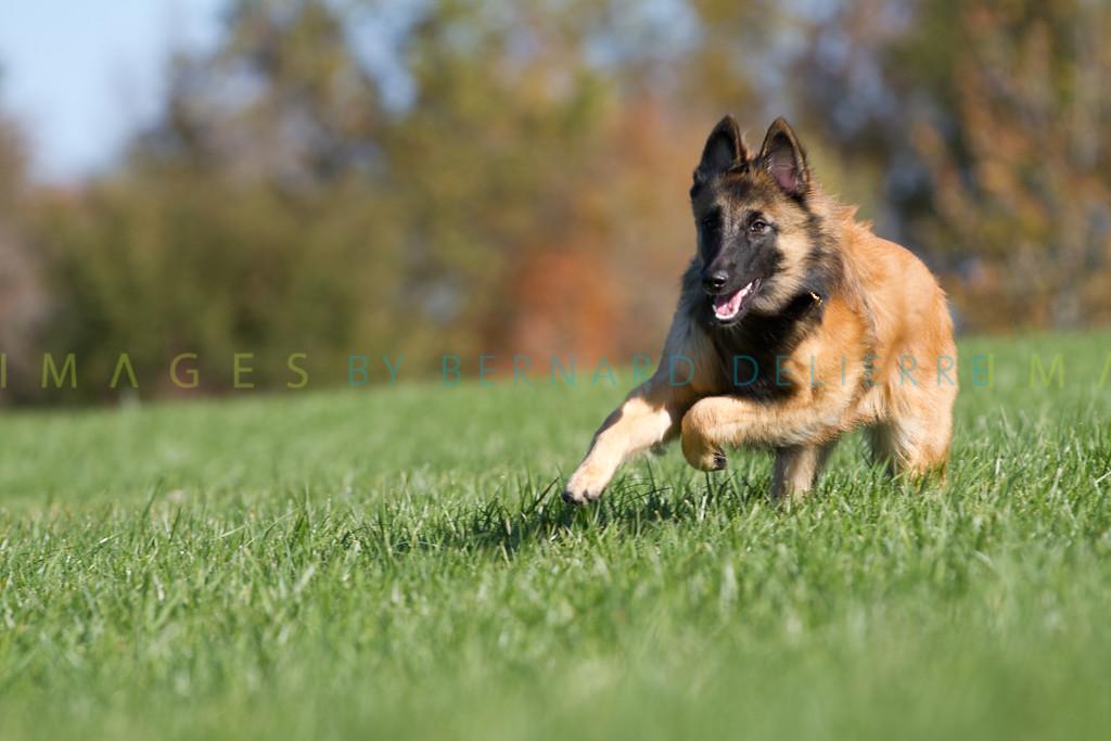 111025-dog-sedona-0555