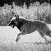 111025-dog-sedona-0902