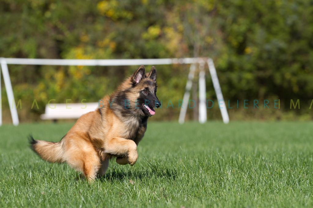 111025-dog-sedona-0692