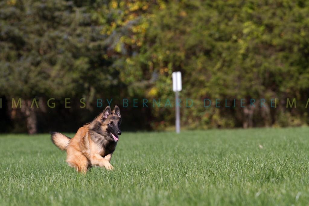 111025-dog-sedona-0687