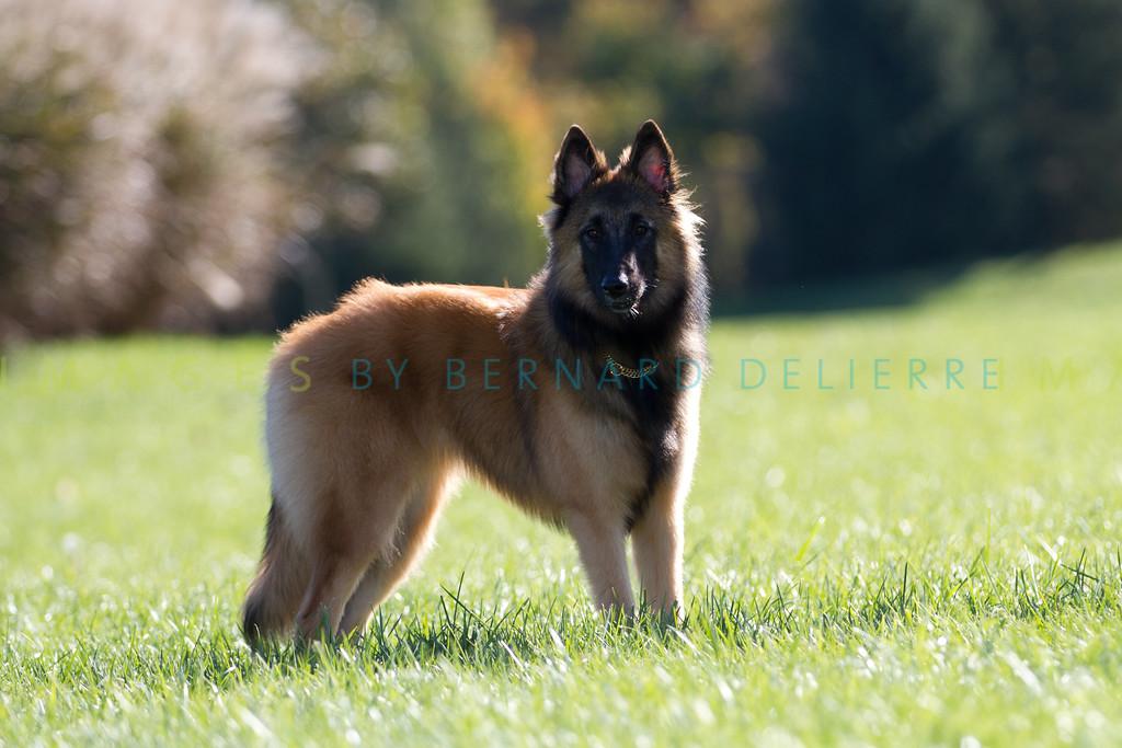 111025-dog-sedona-0859