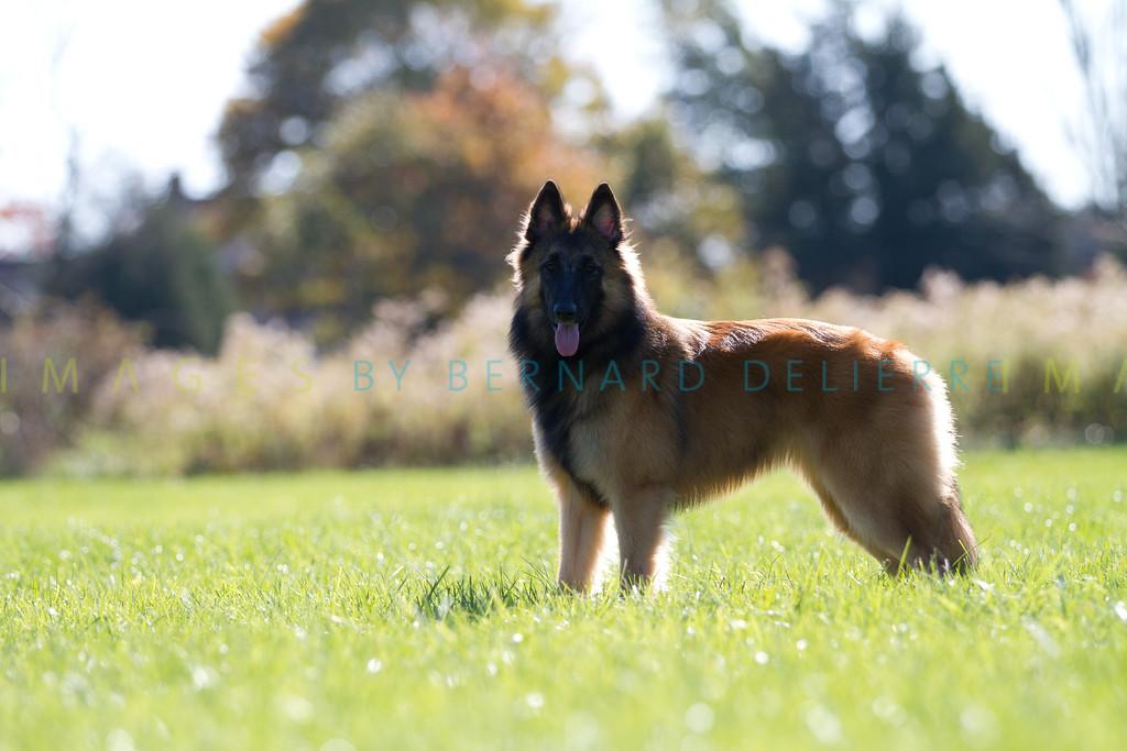 111025-dog-sedona-0805