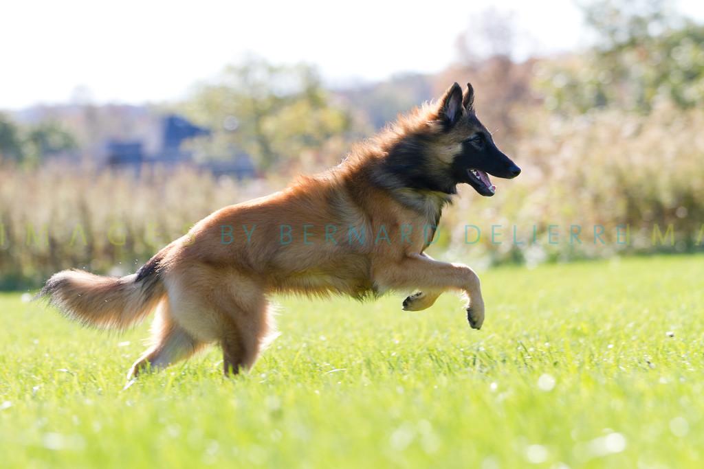 111025-dog-sedona-0825