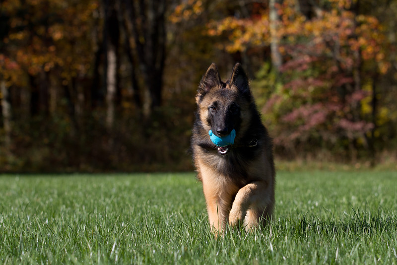 111025-dog-sedona-0748
