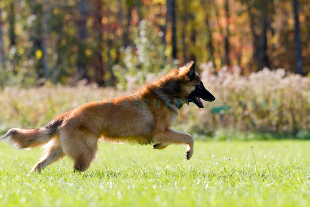 111025-dog-sedona-0829