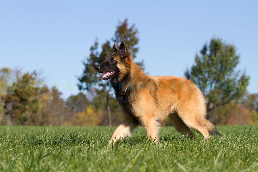 111025-dog-sedona-0586