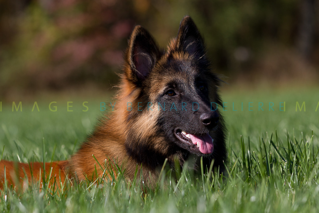 111025-dog-sedona-0762