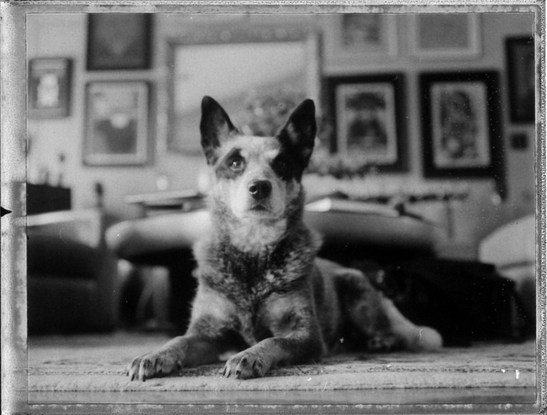 KuKu Blue, Film (polaroid - Fujifilm fp3000b)