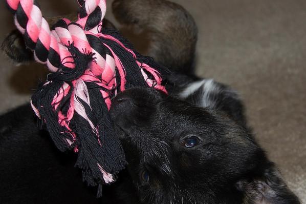 yuna dog
