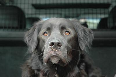 Rufus 2005-2018