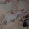 Boy #2 Newborn