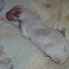 Boy # 1, newborn
