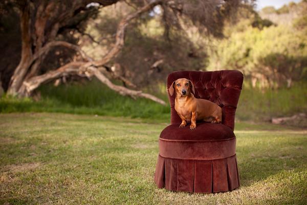 Fritzi Velvet Chair