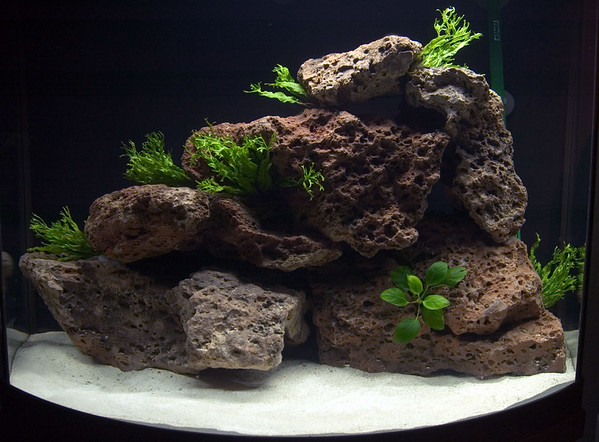 added mostly Java fern, but it didn't do too well.