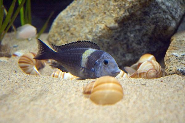Same snail shells as in my tank!