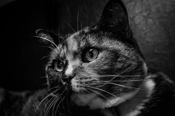 Nov17 - 18th - B/W Cats