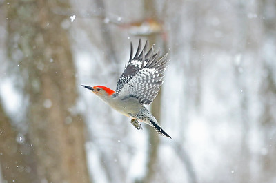 Winter Flight