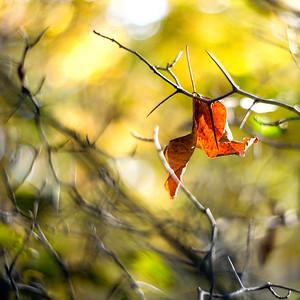 thorn and leaf-7301 6x6