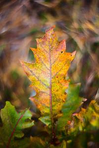 leaf-7239 4x6