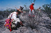 Récolte du peyotl par des pèlerins. Indiens Huichols/Mexique