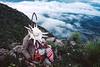 Recueillement d'un pèlerin après un rituel sur une colline de la terre sacrée du peyotl. Indiens Huichols/Mexique